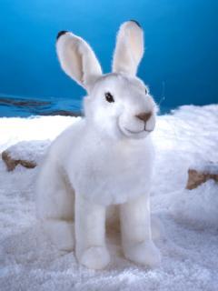ユキウサギの画像 p1_12